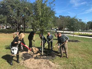 USF Campus Tree Donation